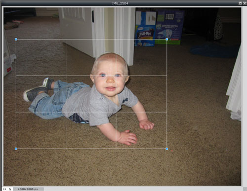 beginners guide how to crop digital image