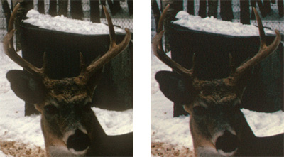 Nikon 5000 and Nikon 9000 Kodachrome Scanning Example. Digital Ice, Zoomed In. Deer Photos